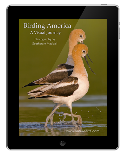 Birding America; A Visual Journey